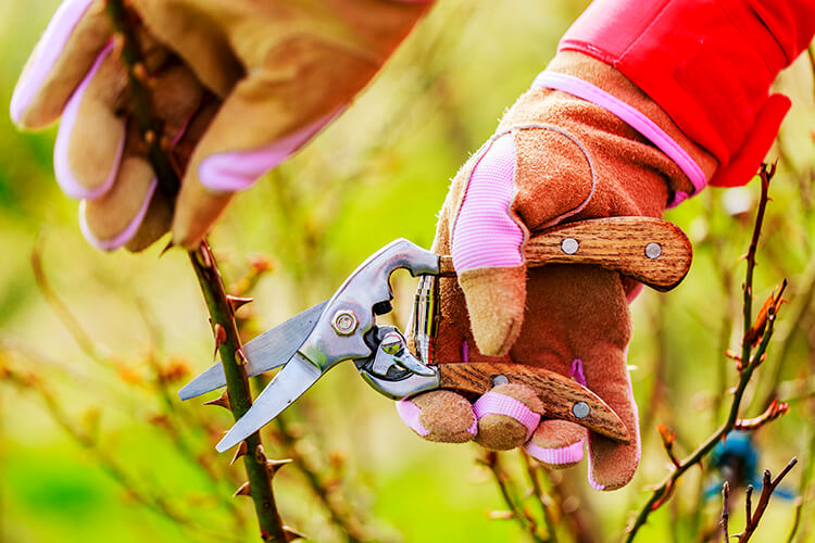 Pruning Tips and Techniques for Healthy Trees and Shrubs