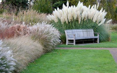 Fall-ing for Ornamental Grasses