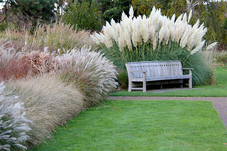 Ornamental Grasses - Should I trim them back in the fall?
