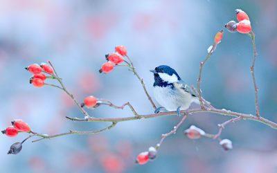 Add Winter Interest to Your Gardens