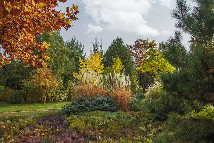 Add colour to your garden in the fall - colourful autumn gardens