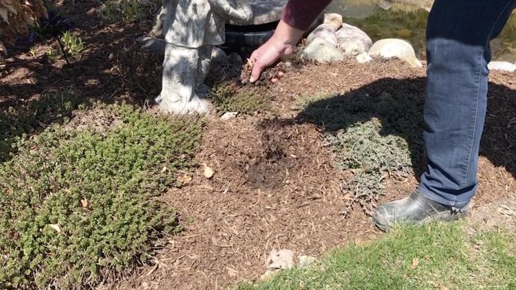 Lawn & Garden Prep Series – Mulching