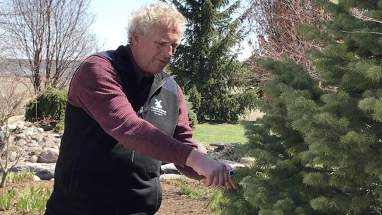 Lawn & Garden Prep Series – Pruning