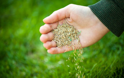 Lawn Care 101 – Choosing Grass Seed