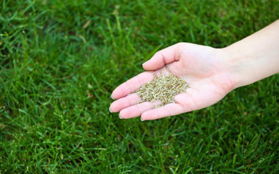 Lawn Care 101 – Overseeding