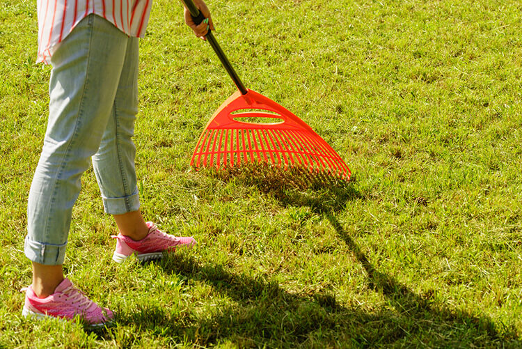 Raking Lawn Care Maintenance Stratford St. Marys Landscaping DIY A Touch of Dutch Landscaping