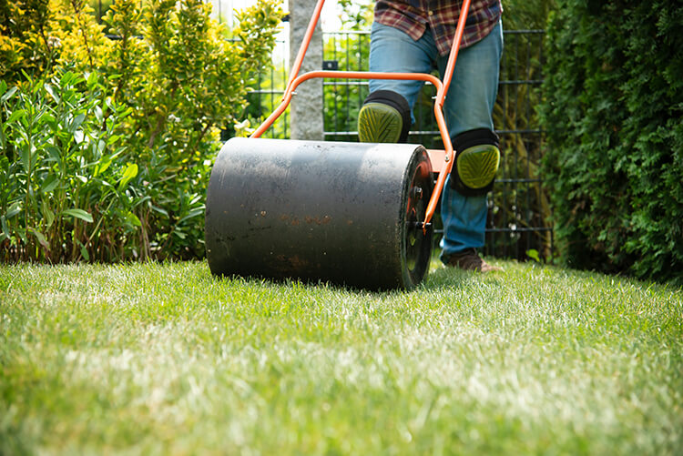 Lawn Care 101 – Aerating & Rolling